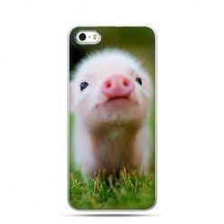 Etui na Apple iPhone 6 plus - Śmieszna świnka